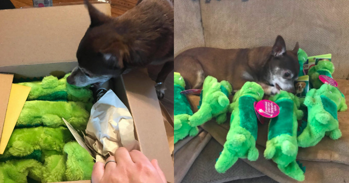 Social Media Helped A Chihuahua Find His Favorite Toy Again