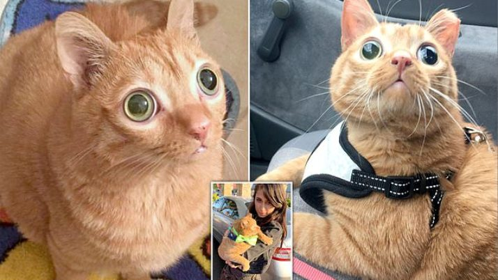 Meet Potato the googly-eyed cat whose expression has actually won him 50,000 social networks fans|Daily Mail Online